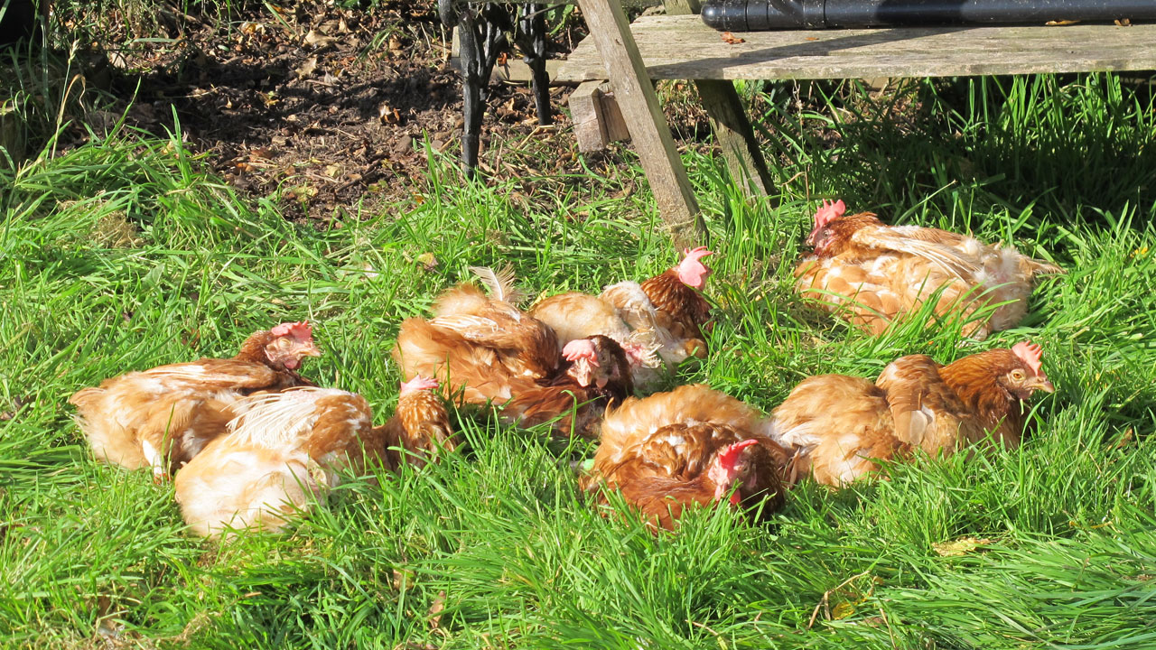 hens-2015-09-group